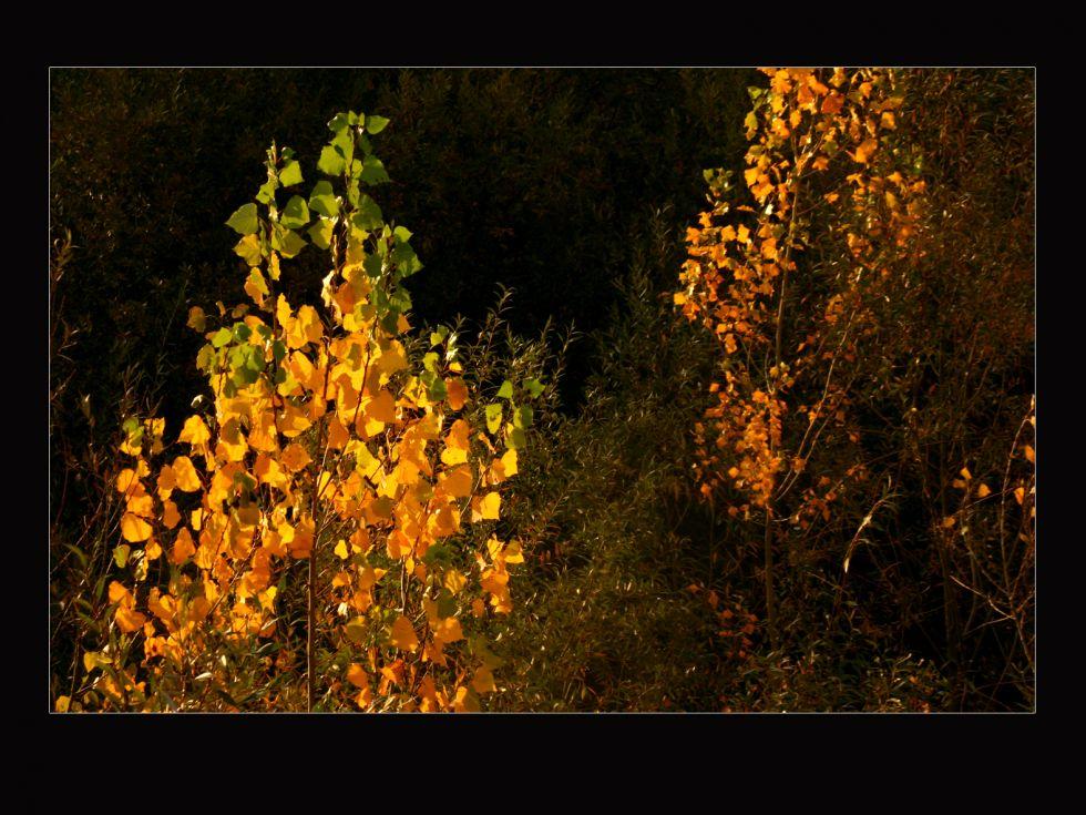 el otoño de los arboles