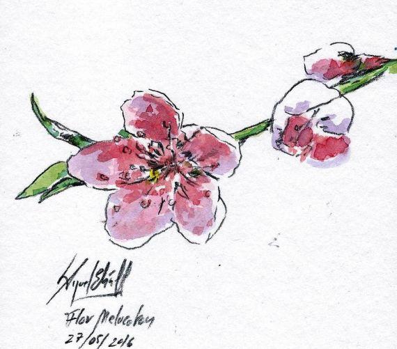 2-flor-de-miguel-elias