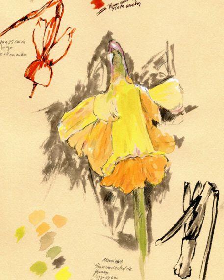 5-flor-de-miguel-elias