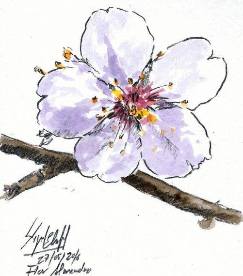 6-flor-de-miguel-elias