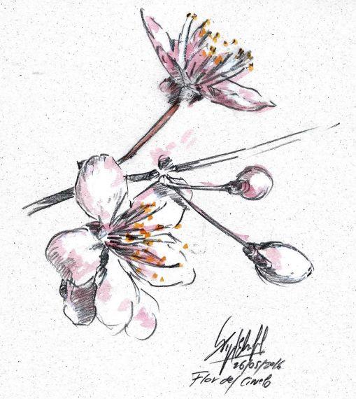 3-flor-de-miguel-elias