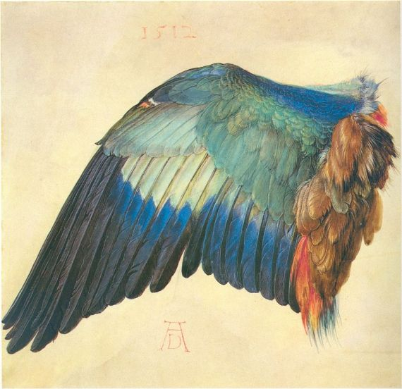 5 Dibujo de un ala de ave, de Durero